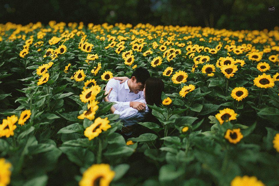 Vườn Hoa Hướng Dương Đà Lạt-4