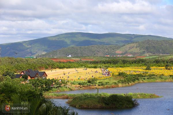 Vườn Hoa Hướng Dương Đà Lạt